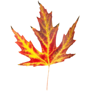fall-leaf-4