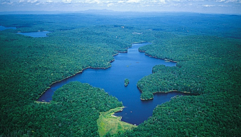 View of a lake surrounded by trees