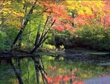 Lenox Fall Foliage