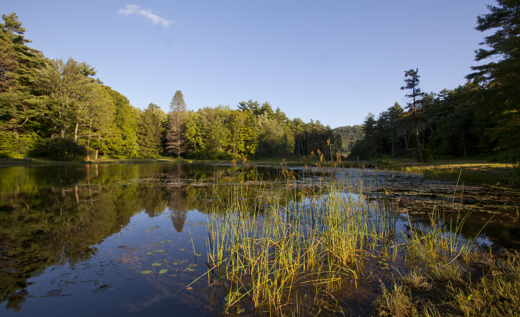 Pleasant Valley Nature Sanctuary is a Fantastic Berkshires Trail